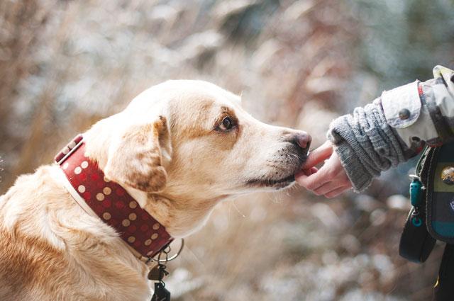 Cane accarezzato sulla bocca dal suo padrone