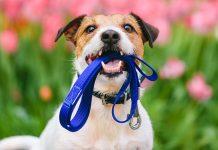 cane-tra-guinzaglio e collare