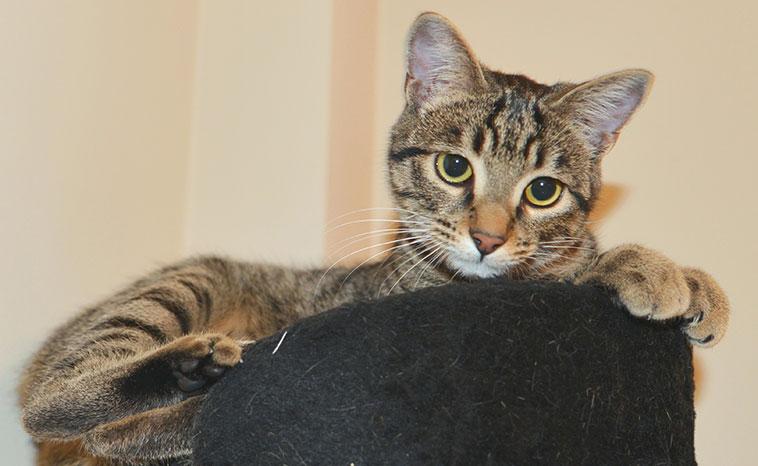 Gatto sdraiato nella sua cuccia in appartamento