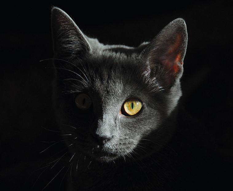 Bellissimo gatto grigio scuro in una foto in penombra