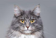 Miti-da-sfatare-sui-gatti