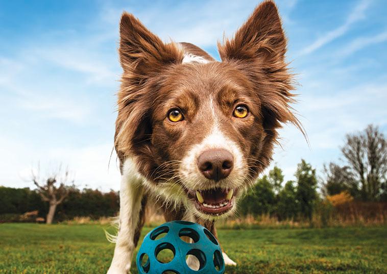 Cane con la palla nel campo