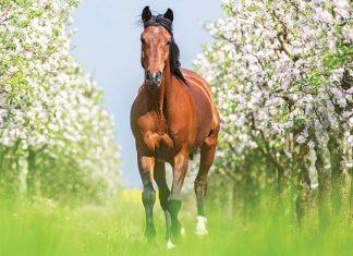 cavallo-al-pascolo-per-controllo-primaverili-di-stagione