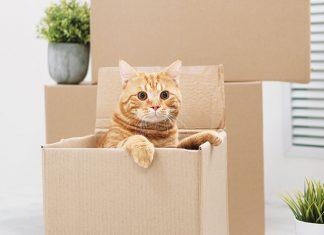 Gatto-nascosto-dentro-una-scatola