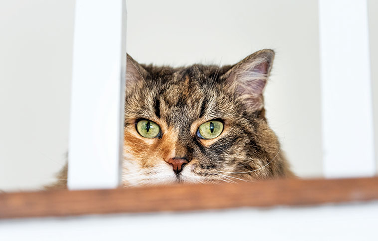 Gatto nascosto sulle scale dopo un trasloco di casa