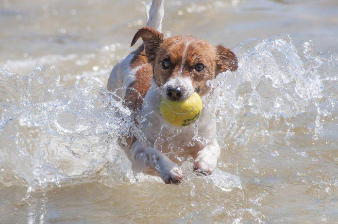 giochi cane mare