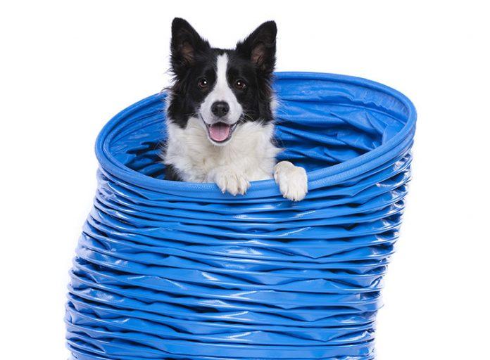 Cane-atleta-salute-articolazioni