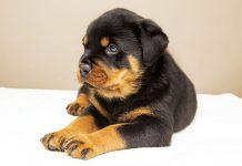 Cucciolo-prendersi-cura-di-lui