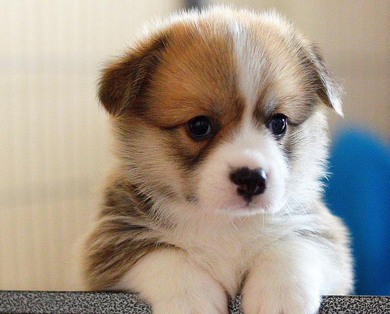Cucciolo di cane in primo piano