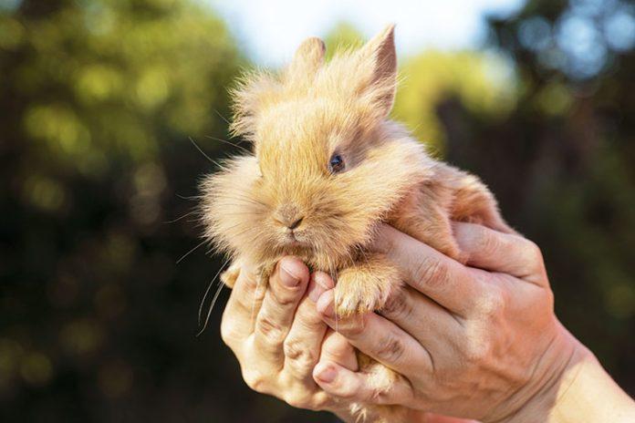 Pet-therapy-il-coniglio-animale-adatto
