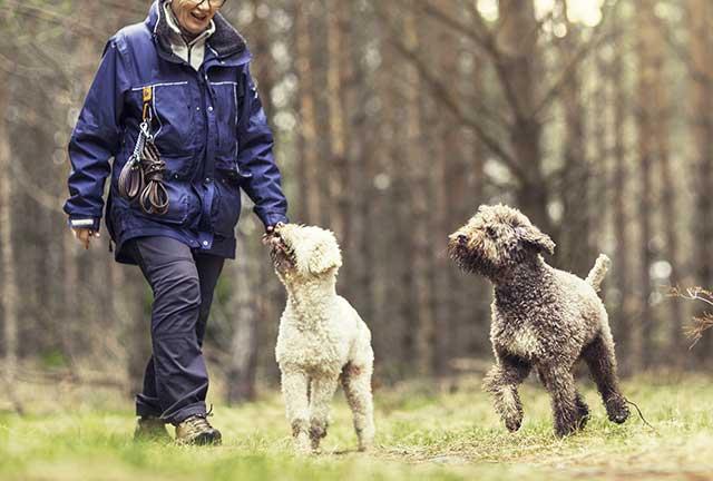 Cani a passeggio con la padrona  con la coda abbassata e dritta