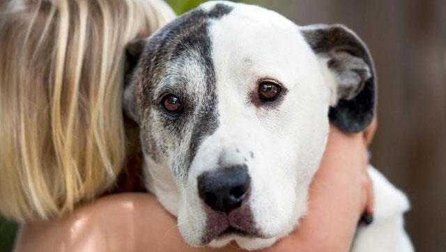 Foto di un cane in ansia abbracciato dalla sua proprietaria