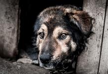 cane catena maltrattamento sanzioni