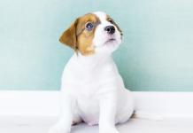 protezione articolazioni cani piccola taglia