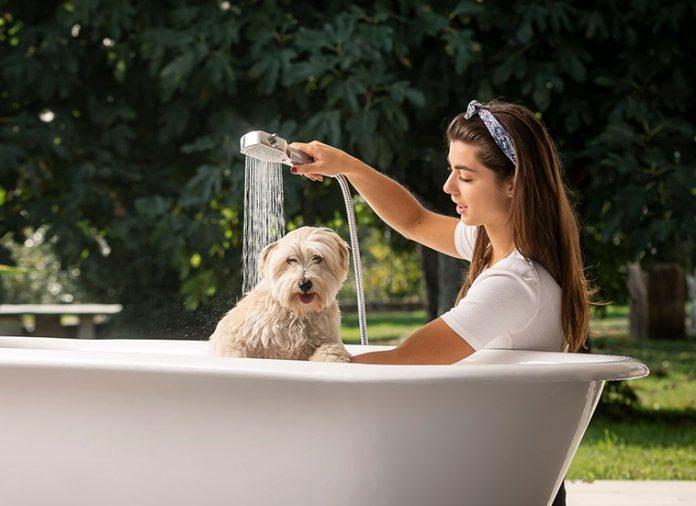 docciaspazzola per animali domestici