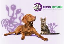 cane gatto parassiti intestinali