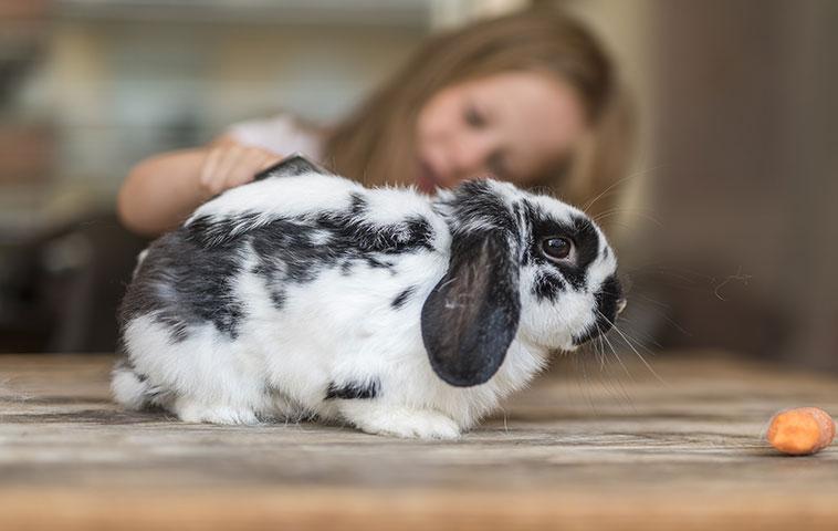 Coniglio colore bianco e nero disponibile per la pet therapy