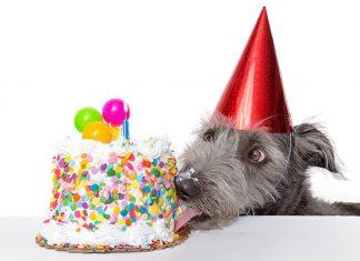 Compleanno-petfamily-20-anni