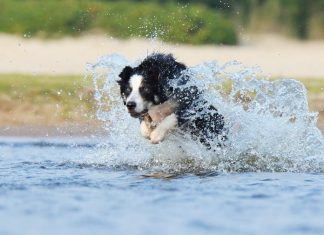 1° Dog Sport Experience