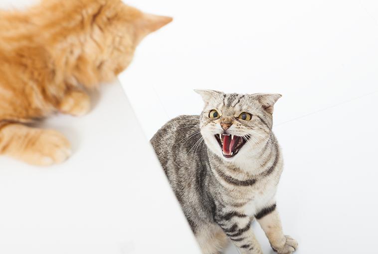 Gatto impaurito alla presenza inaspettata di un'altro gatto