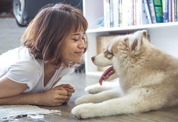 prodotti pulizia casa animali