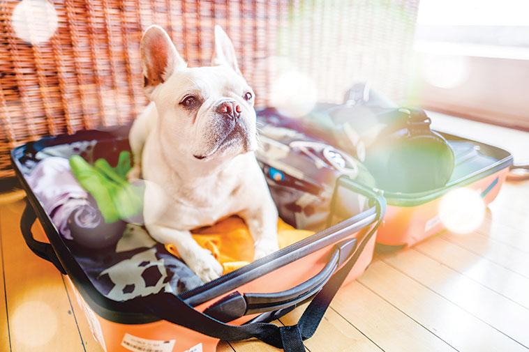 Cane seduto nella valigia pronto a partire