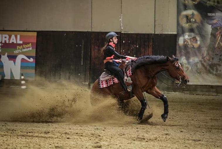 Cavallo mentre durante una prova di ubbedienza