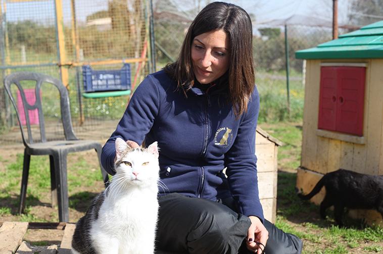 Gatto accarezzato da una educatrice