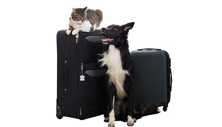 Cane e gatto con le valigie pronti a partire