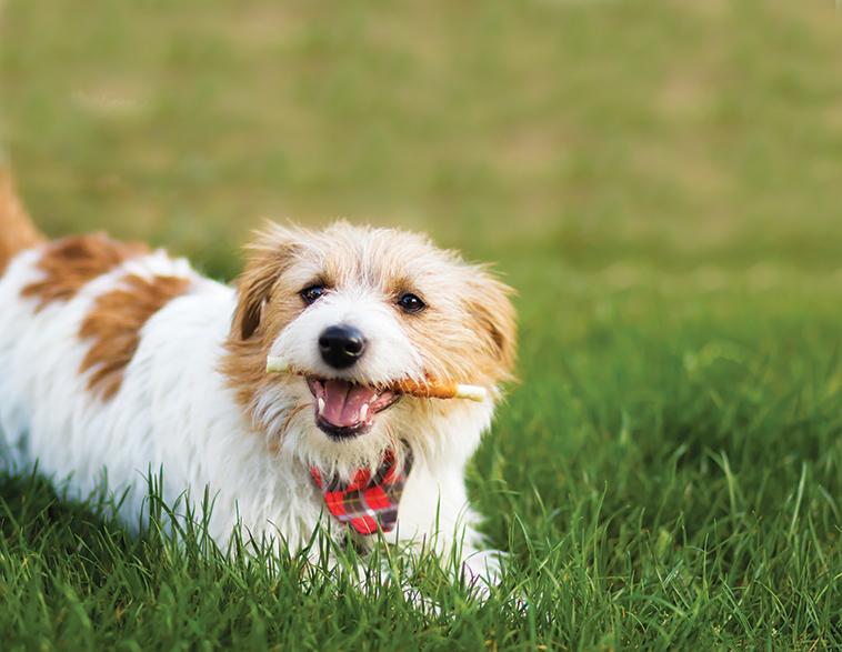 Cane con biscotto in bocca