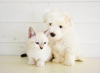 freskissimo-alimento-cane-gatto