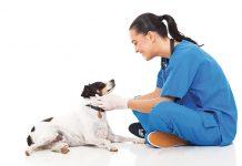 cane-gatto-salute-secondo-natura