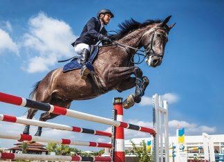 problemi-articolari-cavallo-sportivo