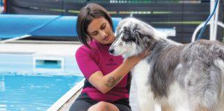 massaggio-acqua-cane_web1