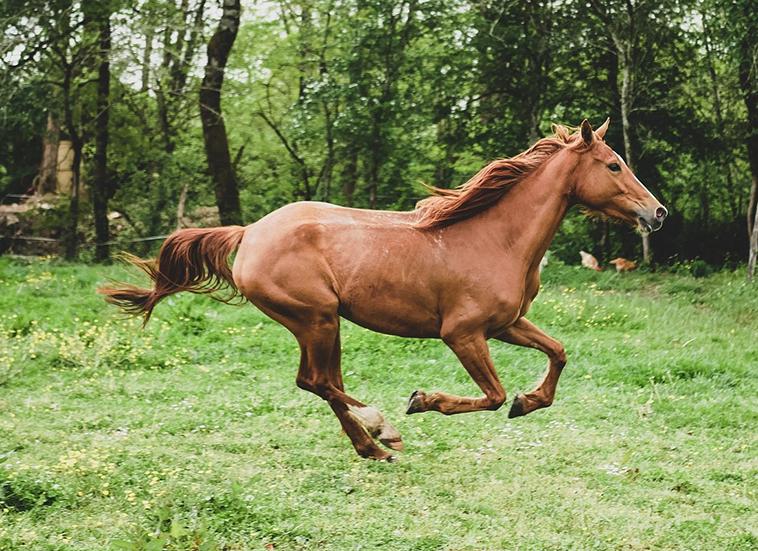 Cavallo a galoppo