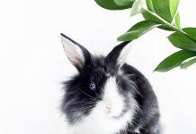 lo-stress-nel-coniglio